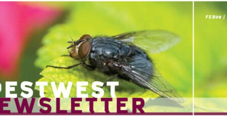 Newsletter PestWest Nr 1