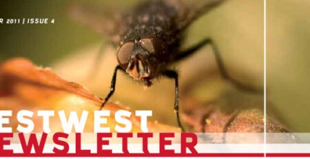 Newsletter PestWest Nr 4