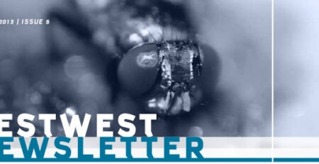 Newsletter PestWest Nr 6