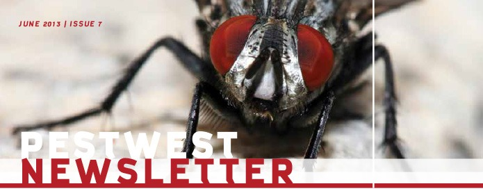 Newsletter PestWest Nr 7