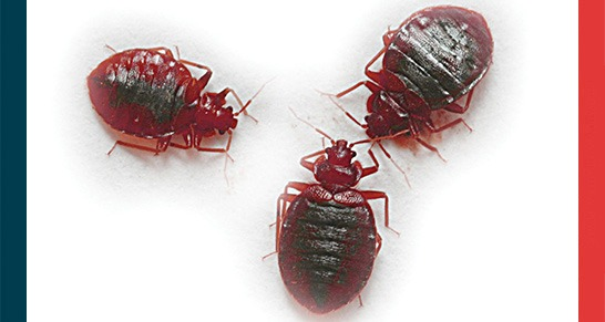 Here, There, Everywhere!