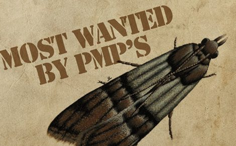 Most Wanted By PMP's - Indian Meal Moth