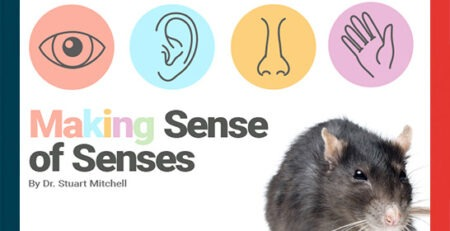 Making Sense of Senses