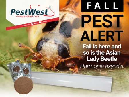 Bugged by Asian Lady beetles? We've got a wonderful solution!