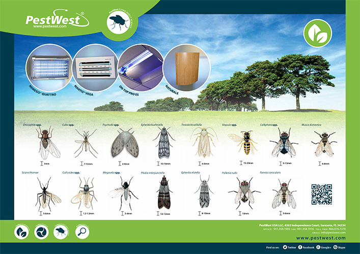 PestWest Fly ID Poster