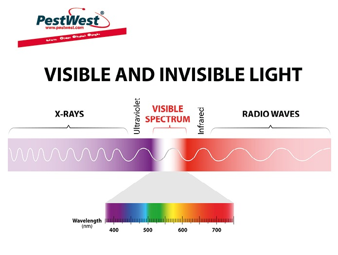 PestWest - What do you know about the safety of UV light?