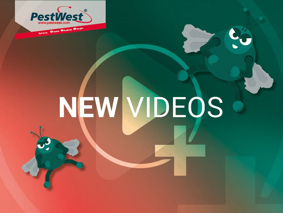 We have new videos!